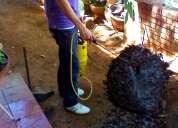 Fumigaciones eliminamos plagas en maracaibo