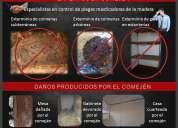 Fumigaciones en maracaibo con productos sin olores molestos
