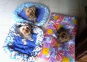 Hospedaje guardería canina perros grandes y pequeños