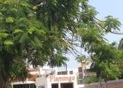 Conjunto residencial flamingo