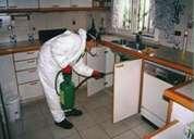 Fumigaciòn contra plagas: cucarachas, chiripas, hormigas y termitas.