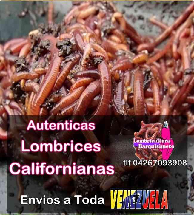 Lombrices Californianas Ventas en Venezuela.