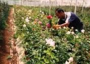 Se vende terreno con cultivo