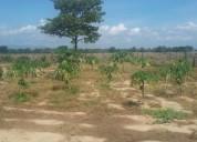 Se vende granja en las palmitas en torres