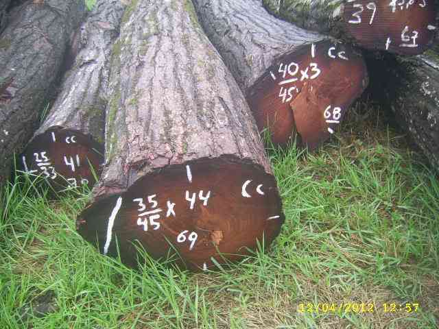 valoraciones, monitoreos forestales colombia