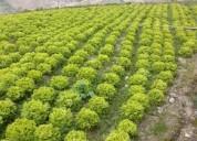 Finca de 5 hectareas para la agricultura en urdaneta