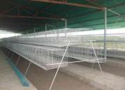 jaulas para gallinas ponedoras somos fabrica