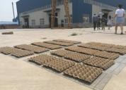 Maquina  de fabricar cartones para huevos