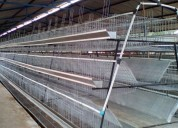 Fabrica de jaulas para gallinas ponedoras