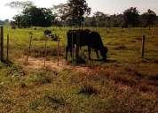 En venta terrenos de 2 7 hectareas en san diego valencia