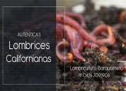 Lombrices rojas californianas venezuela