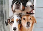 Entrenamiento canino a domicilio y video chat