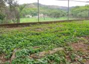 Terreno colinas de guataparo de 20.000 m2 idt-406
