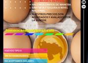 Huevos al mayor al mejor precio